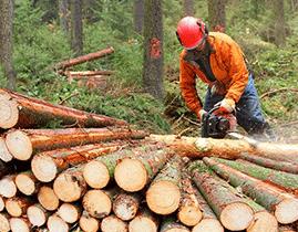 Evidence docházky v lese
