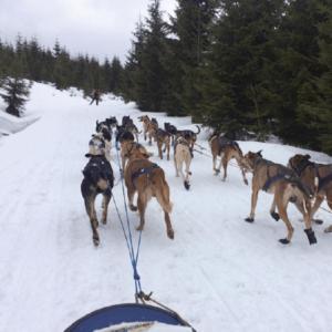 Závody psích spřežení