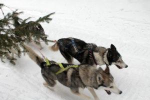 Závody psích spřežení 2018